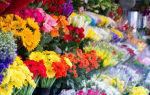Как и какие цветы выбрать для девушки