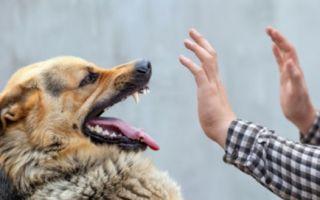 Как защититься от собаки на улице