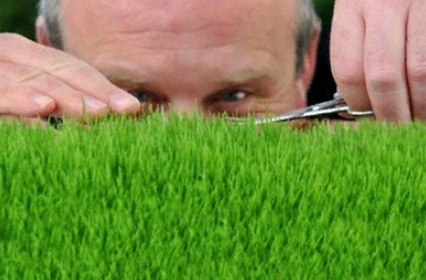 Мужчина занимается подстриганием травы. Смотрит, чтоб травинки были одинаковой высоты