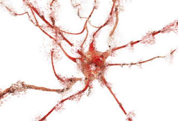 Нервная клетка, поддающаяся разрушению