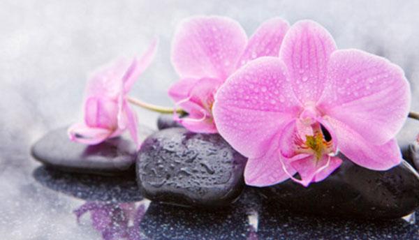 На камнях лежит розовая орхидея