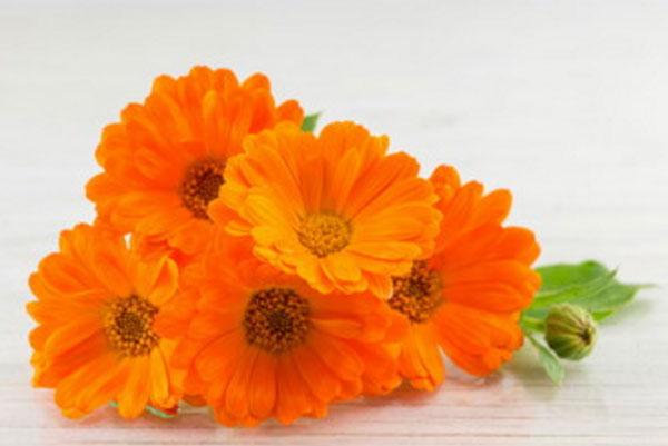 Букет из пяти цветов календулы
