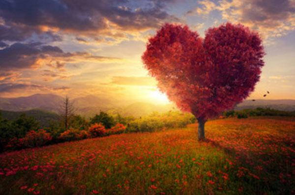 Красивая поляна, закат, дерево с кроной в форме сердца