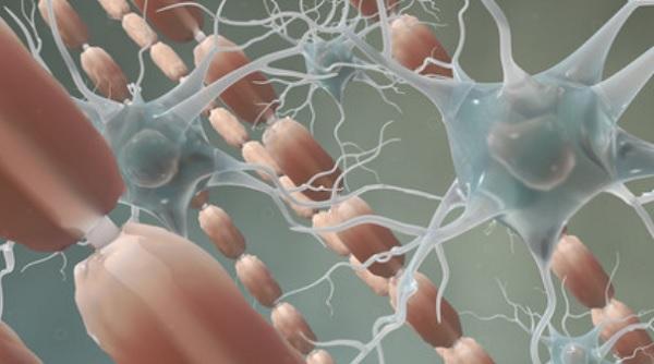 Нервные клетки и волокна