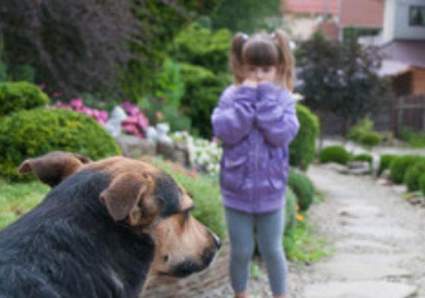 Девочка боится. Перед ней сидит собака