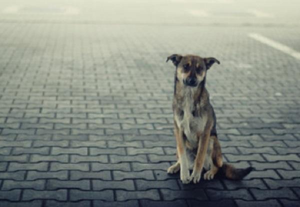 Собака сидит на улице